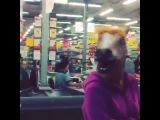 Лошадь, в маске коня!